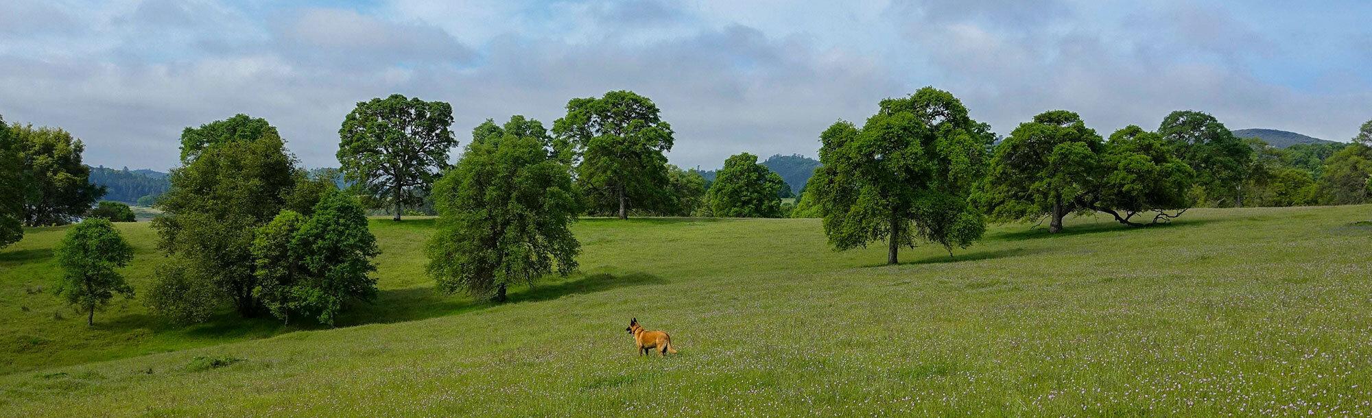 header regency at folsom ranch homes for sale